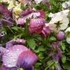 雨粒が美しい、初詣、お薬のこと等。