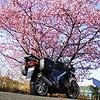 春だ!サクラだ!伊豆河津桜ツーリング2008