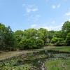 初夏の昭和記念公園と猫(^^)