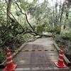 台風と京都と、日がさす糺の森