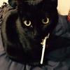 【黒猫】舐め癖がついてしまった猫のハゲ治療【後編】