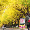 北大構内の紅葉模様。イチョウ並木と北大マルシェ Cafe&Labo