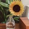 元気をもらえる花🌻