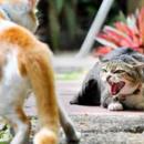 7/9室内猫没っちゃんと野良猫が窓ガラス越しにギャーギャー雄叫び合うのを初めて目撃❗️❗️