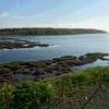 早朝の風蓮湖の水の中を歩くタンチョウ