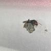 浜松市でベランダに出来たハチの巣を駆除してきました!