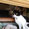 今日の黒猫モモ&白黒猫ナナの動画ー1042