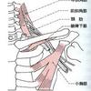 旨の筋肉と痺れの意外な関係