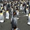 ペンギンのふん、温室効果ガス「亜酸化窒素」を大量に排出 研究