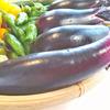 7月の収穫報告と家庭菜園料理