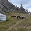 「西村アース」=「いいねアース」前二作と対極・牛も死ぬ極寒のモンゴルはマイナス30度!!「いいねじゃねえよ!!」西村の魂の叫びさえ凍りつかせた雪原で、彼らが見たものは!!