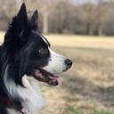犬との日々