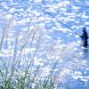 神通川の鮎釣り人