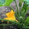 5月中旬の庭4