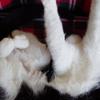 今日の黒猫モモ&白黒猫ナナの動画ー719