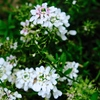 PANACHEの花たち