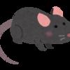 【bluetoothマウス】接続が途切れるときの解決方法。