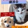 「10/6 譲渡会のお知らせ」のお知らせ