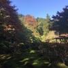 今年の紅葉は例年より早かったです(^◇^;)←滋賀県の場合