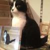 ツーショットの 猫さん