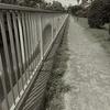 7月3日 自宅から日本橋を経て秋葉原まで猫さま歩き とその情景