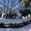 2018年寒さはいつまで?冬の終わりと桜開花予測