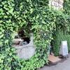 *妖精が住んでいそうなお店【 木を植えるレストランオーロラ】で絶品のランチ♥*