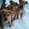 猛吹雪の最中と止んだ後の犬たちの動画