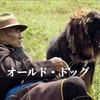 「オールド・ドッグ」ネタバレレビュー・あらすじ:映画から10年の今、老犬はいまだ死なず…を願う