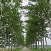 十勝牧場の白樺並木(十勝その5)