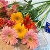 お花をいただきました!まさかの展開にミコマコ喜ぶ🐶🐶🌼🌸