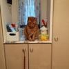 猫さん、新しいご飯が届きましたよ!