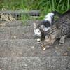 捨猫を保護!捨て猫飼育経験者が教える里親になる為の手順と飼育方法