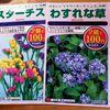 暖冬と庭の植物