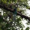 国鳥ケツァールの観察スポットその2 ケツァルテナンゴ県「ロマ・リンダ」