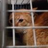 2013 2月 のら猫手術。 と、キッカケ