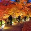 【京都紅葉巡り*3】曇りでも大丈夫◎しっとりと美しい紅葉を堪能してきた〜源光庵・光悦寺・北野天満宮・清水寺