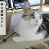 猫の道具 ~キャッチ・ミー・その後~