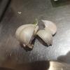 【料理】15分でペペロンチーノ