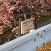 蝶屋桜の名所づくり(前編)
