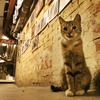 エルミタージュ美術館の猫警備員