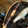 ウグイ 幻の魚
