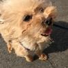 【希樹屋】保護犬活動🐕