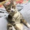 うちの猫が1年間にかかった病気とその治療費