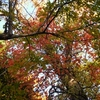 紅葉の野幌森林公園