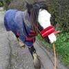 ナッピーをはいた馬。