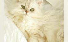 ネコ英語「快適ネコ生活」