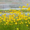 初夏の野草のお花畑 やっぱり要注意な外来種が目立つ