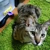 このブログ『キジ猫世間噺大系』について