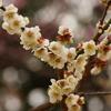 春一番 三千世界に 梅の花